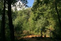 Das Natur Thermalbad Sklené Teplice 2013
